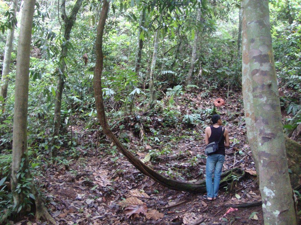 hutan bengkulu