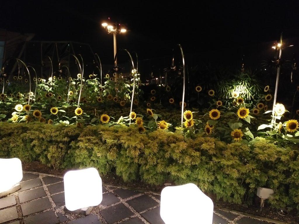 sunflower-garden-changi