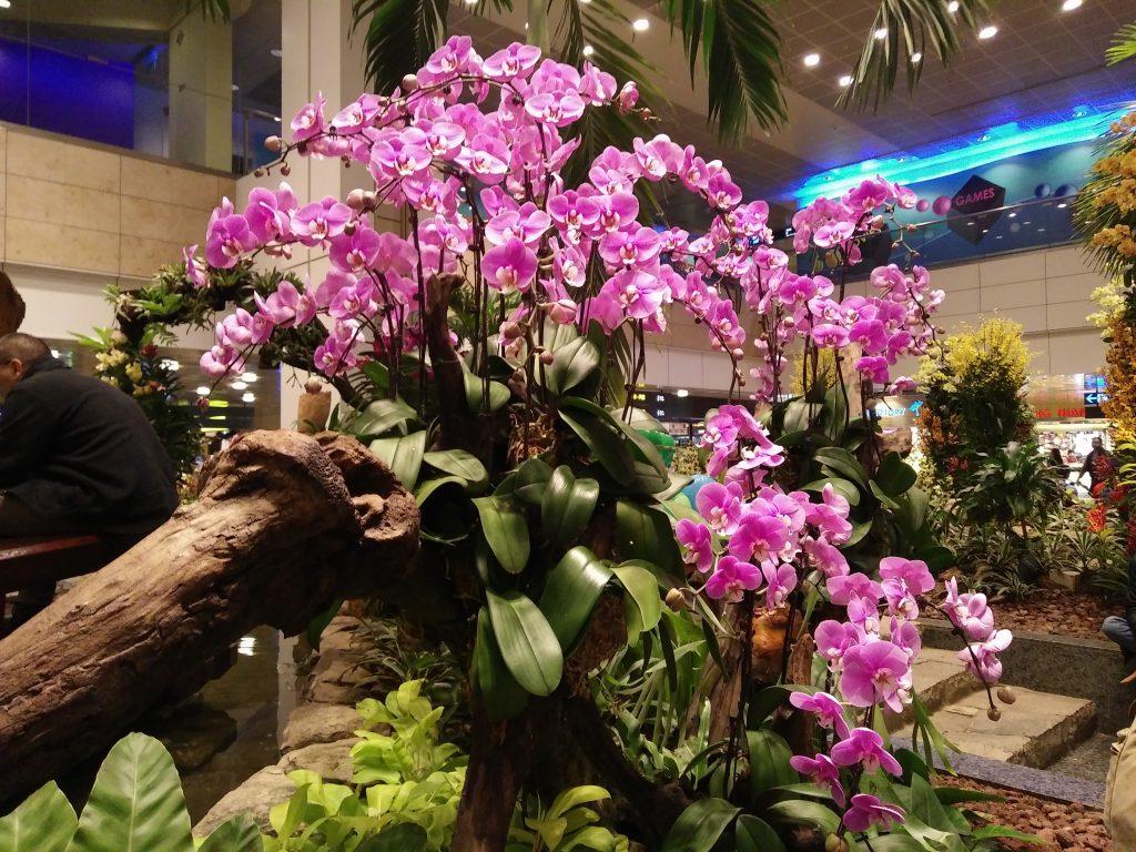 orchid-garden