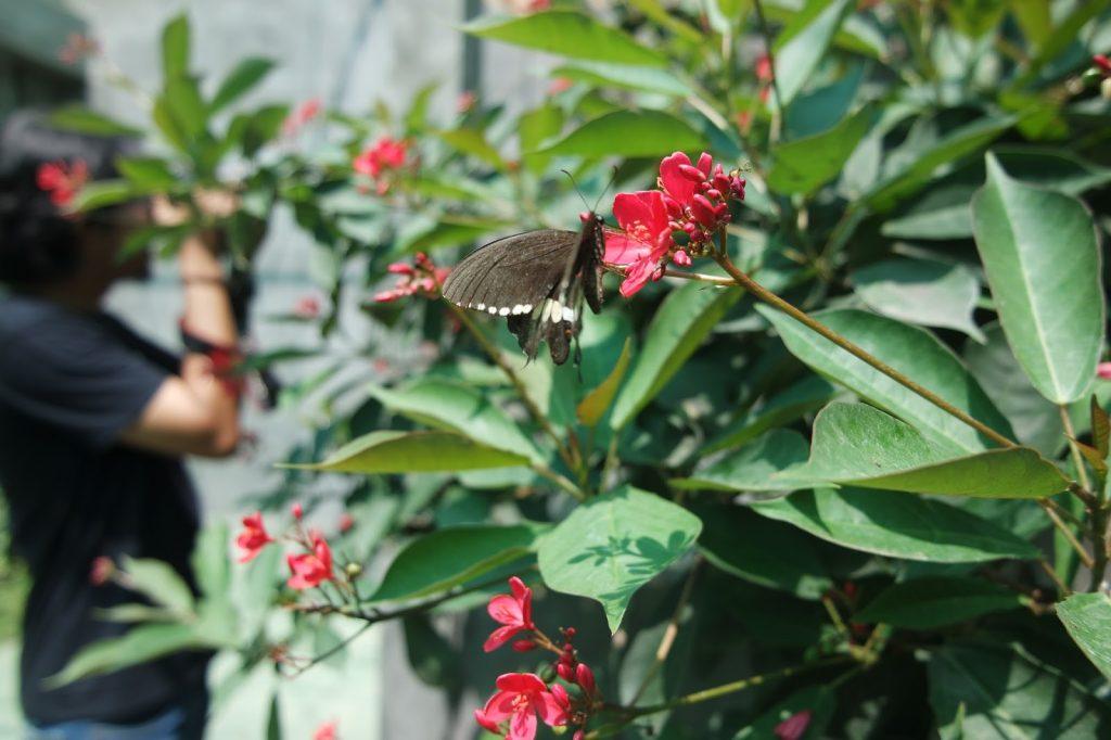 alian butterfly park kebumen