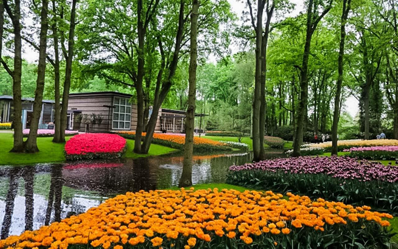Taman Bunga Tulip Keukenhof