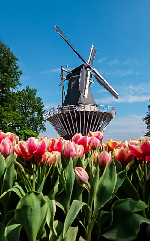 Taman Tulip Keukenhof
