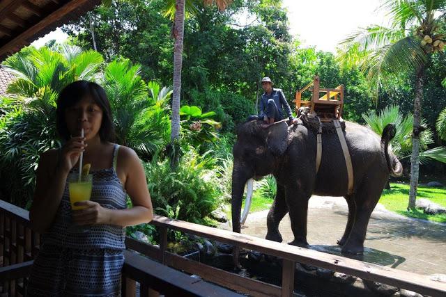 bali-zoo-elephant