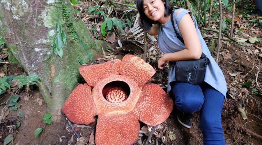 bunga-rafflesia