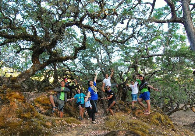 hutan-bonsai