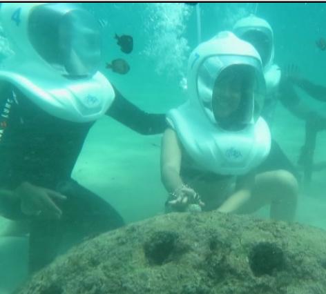 tanam terumbu karang