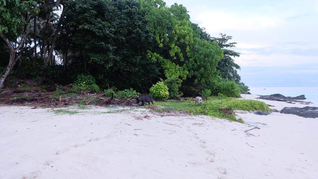 pulau asu di nias