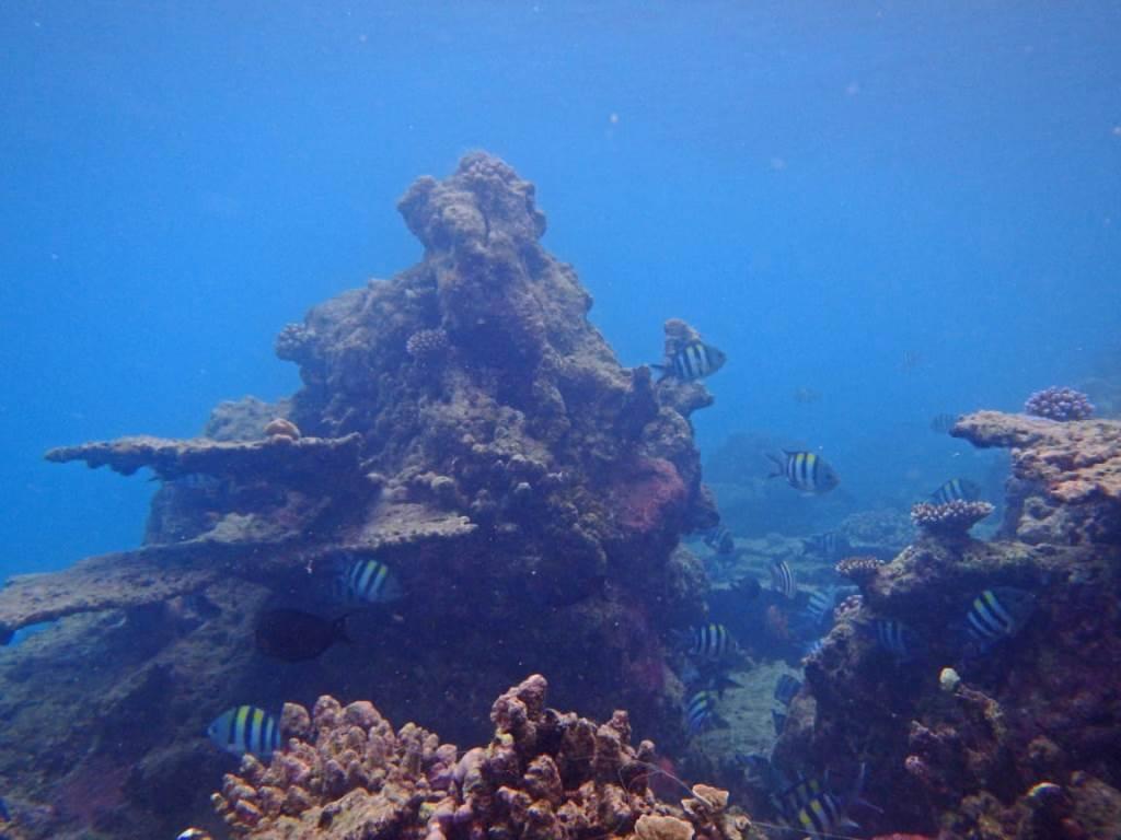 snorkeling pulau asu