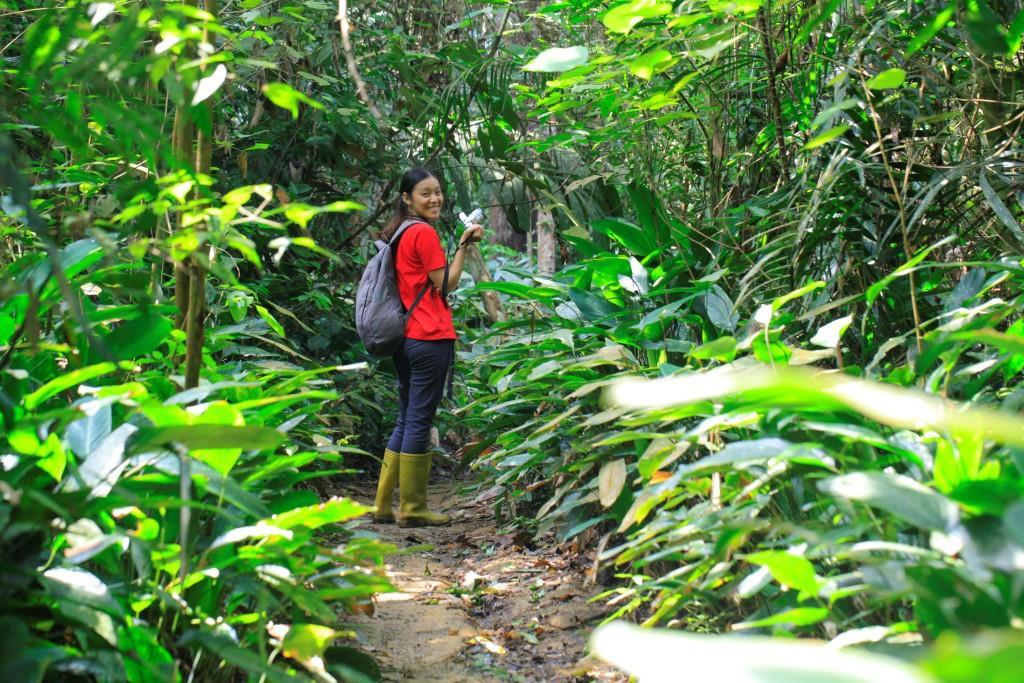 hutan jambi
