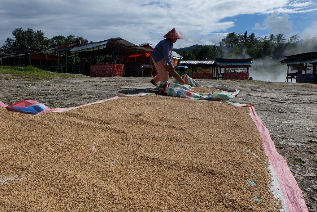 beras payo