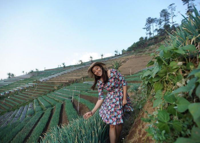 kebun bawang majalengka