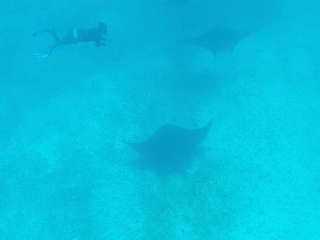 manta rays labuan bajo